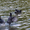 Texas Death Match, Coot Style