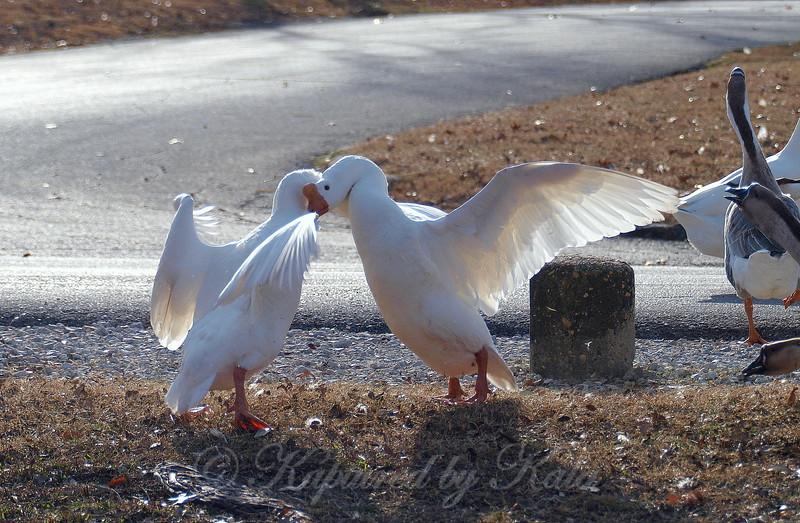 Wild Goose Chase 6