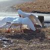 Wild Goose Chase 10