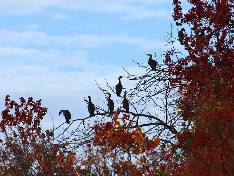 Colors, Clouds And Cormorants
