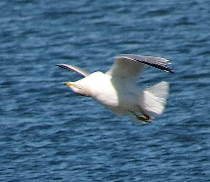 Very Weird Gull