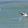 Mr. & Mrs. Avocet View 3