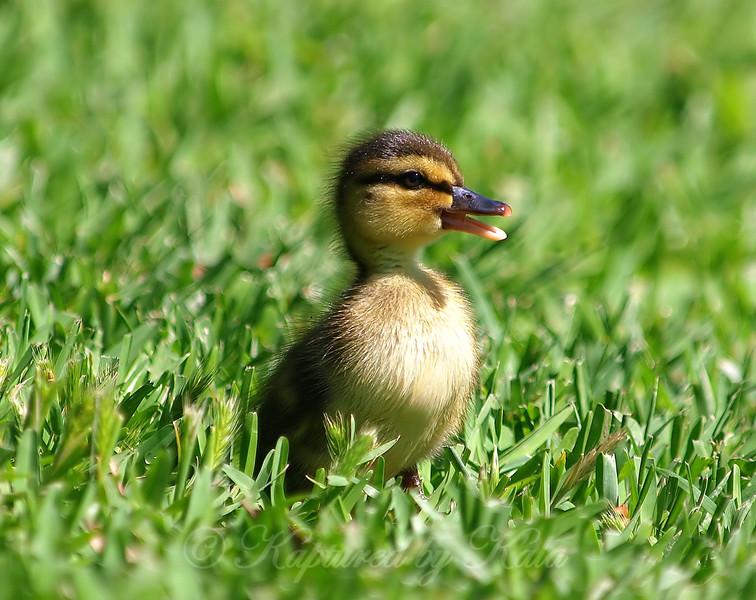 Happy Lil Duck
