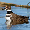 Killdeer Bath
