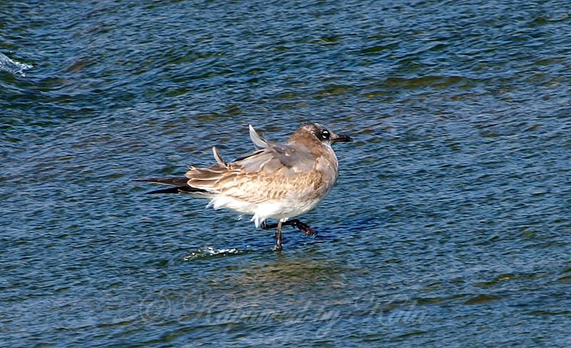 Rare Bird Sighting View 2