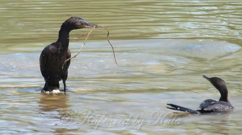 I Gots A Stick