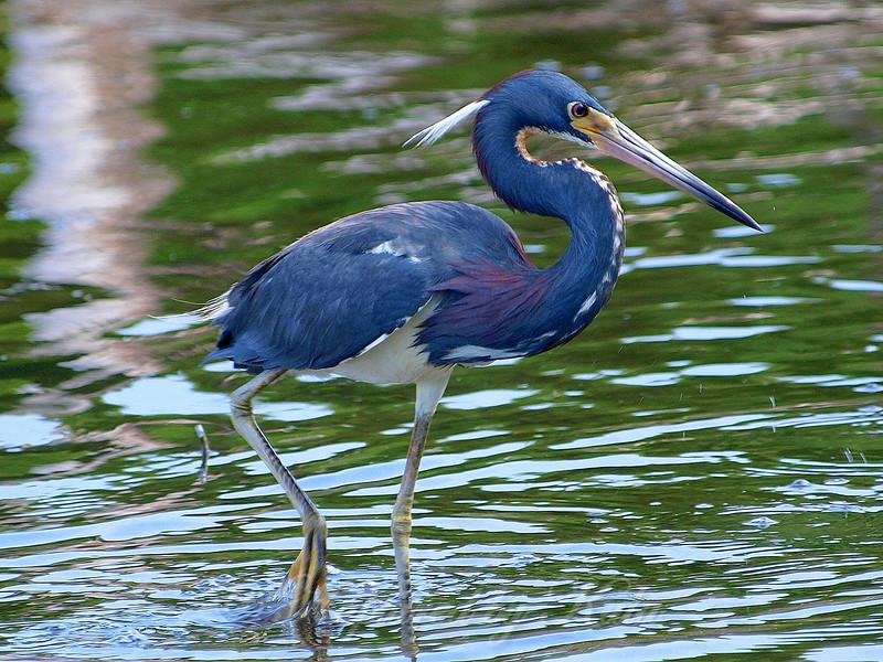 Tiny Bird, Big Beak