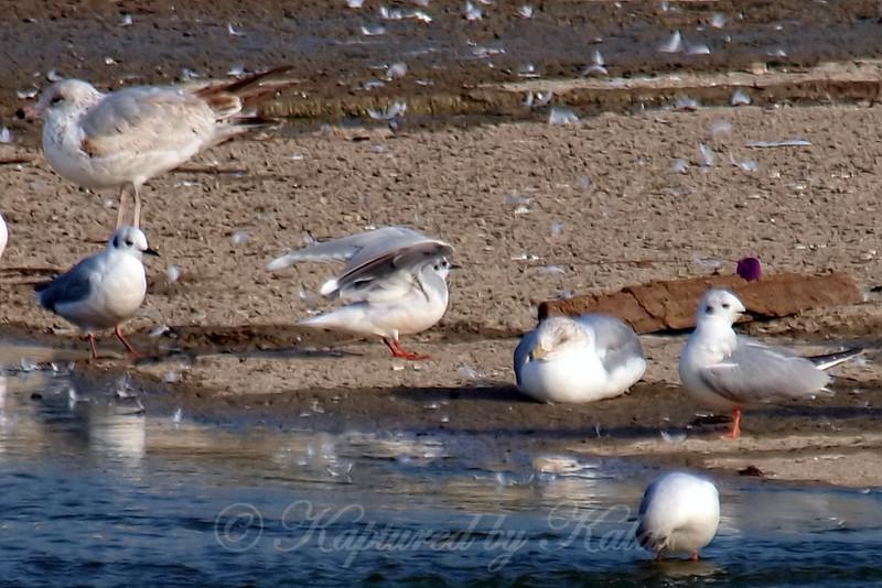 Little Gull View 6