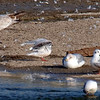 Little Gull View 6
