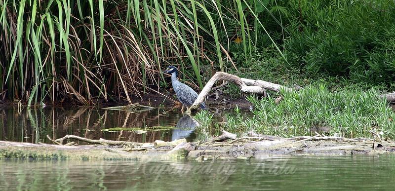 Hidden Cove With Heron