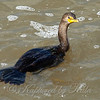 Looking Down On A Cormorant View 1 of 4