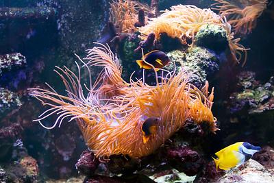 Seneca Park Zoo Aquarium