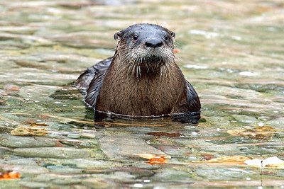 """I Otter Be In Pictures"""