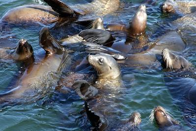 12x18 Seal Sleepover