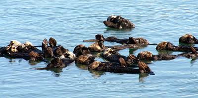 Moss Landing Otter Raft