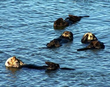 Elkhorne Otters 1