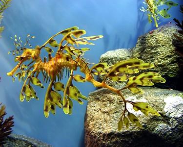 Dragon sea horse 5