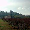 Achat de vin à Buzet sur Baise