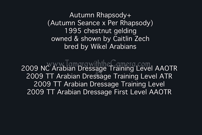 Autumn Rhapsody+