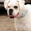 Hartbreaker dog 676
