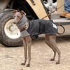 Hartbreaker dog 679