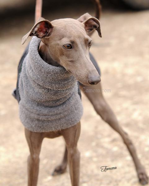 Hartbreaker dog 673