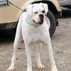 Hartbreaker dog 678