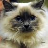 SHN Cats 771