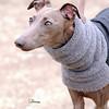 Hartbreaker dog 674