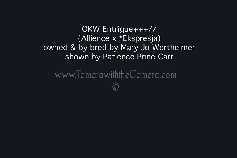 OKW Entrigue+++:: info