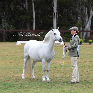 Dry Mare Under 8 Years NR5_2344