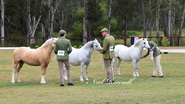 Dry Mares Under 8 Years NR5_2339