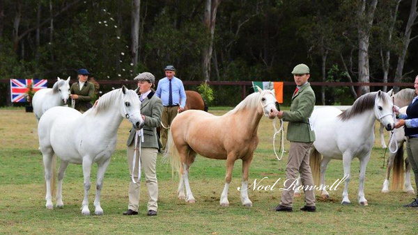 Dry Mares Under 8 Years NR5_2480