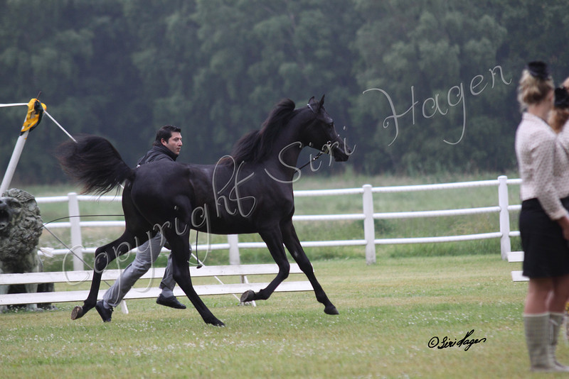 BLA Wild Night (SE) - Tristin BP (US) x BS Wild Love (DE)