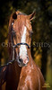 StunningSteedsPhoto-0321-tu