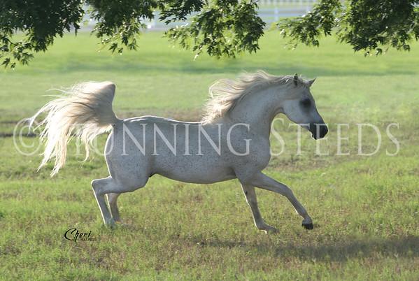 MA Romeo - Texas