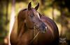 StunningSteedsPhoto-HR-7505