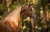 StunningSteedsPhoto-HR-7619tu