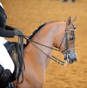 Arabian  AZ _251