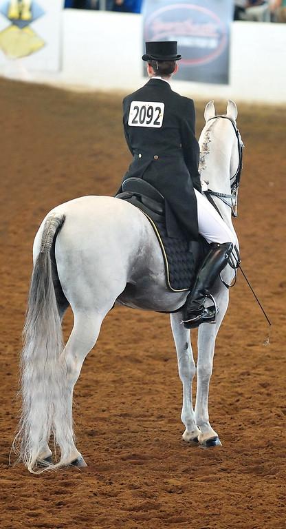 Arabian  AZ _325