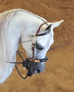 Arabian  AZ _20