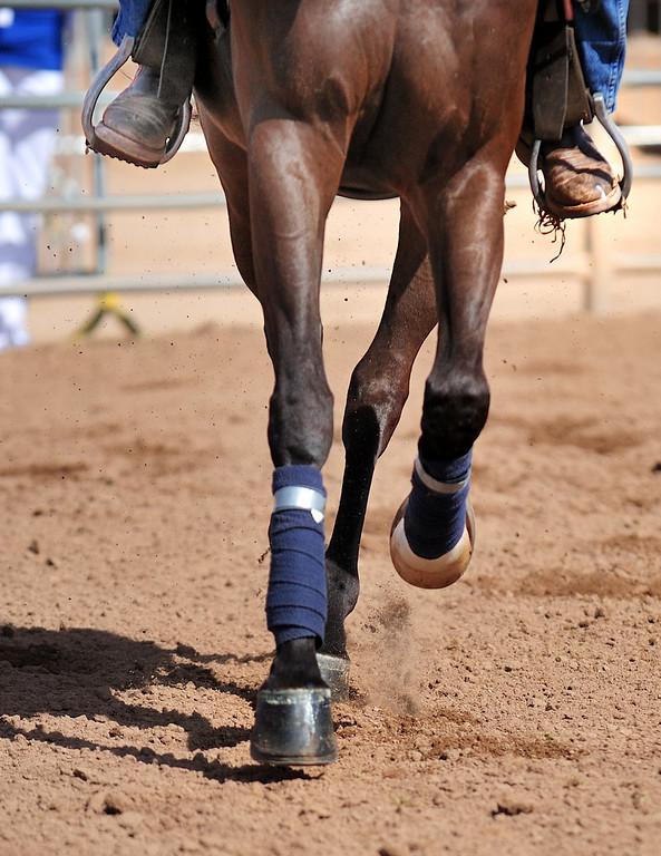 Arabian  AZ _118