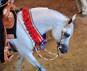 Arabian  AZ _216