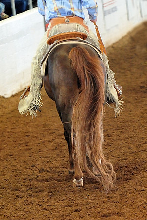 Arabian  AZ _31