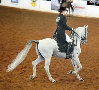 Arabian  AZ _239