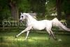 StunningSteedsPhoto-HR-4421tu