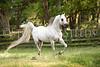 StunningSteedsPhoto-HR-4750tu
