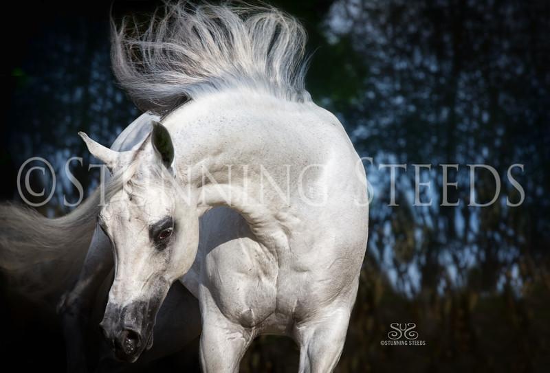 StunningSteedsPhoto-HR-4439tu