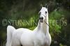 StunningSteedsPhoto-HR-4251tu