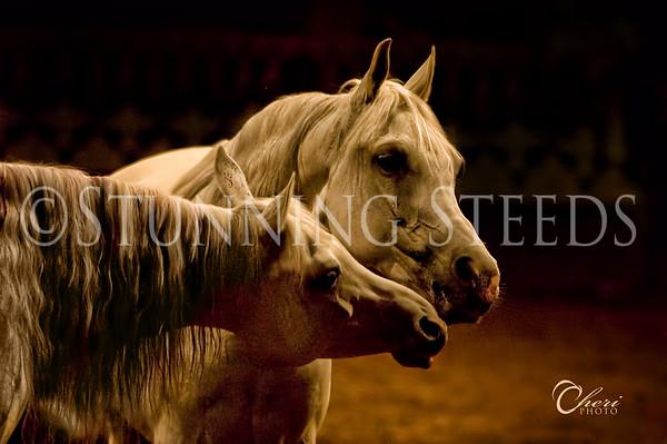 Various Arabian Horses